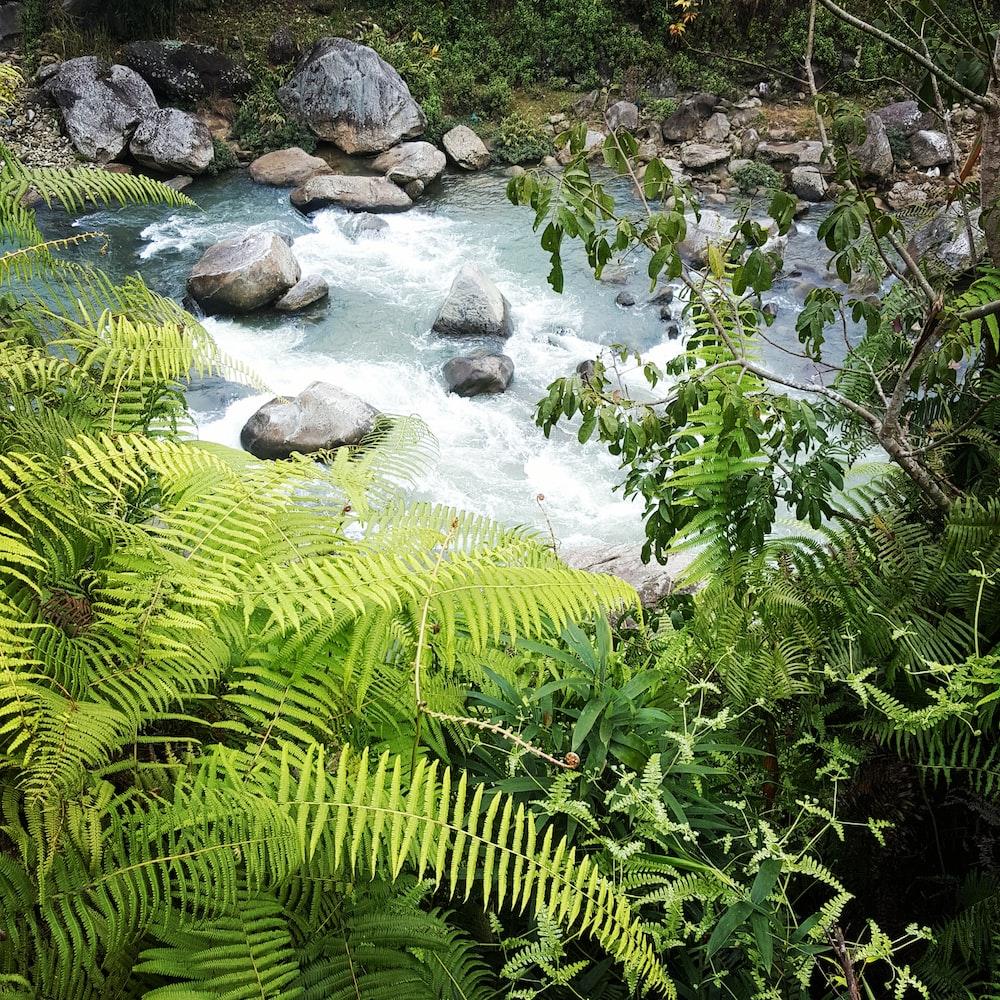 green fern plant on river