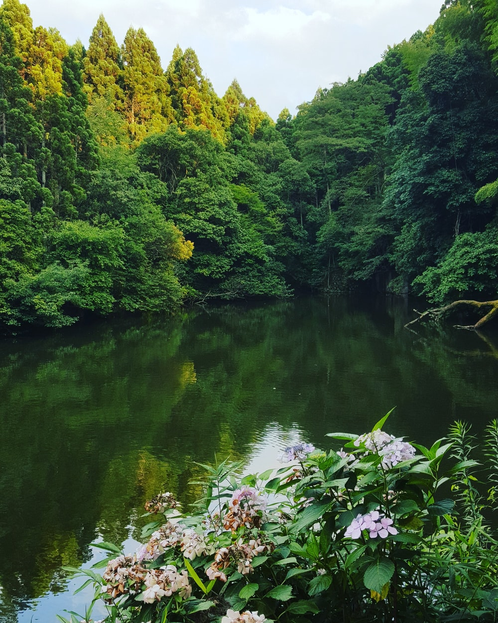 green trees beside river during daytime