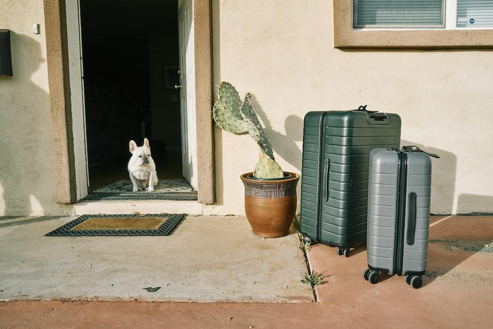 white cat sitting beside gray luggage bag