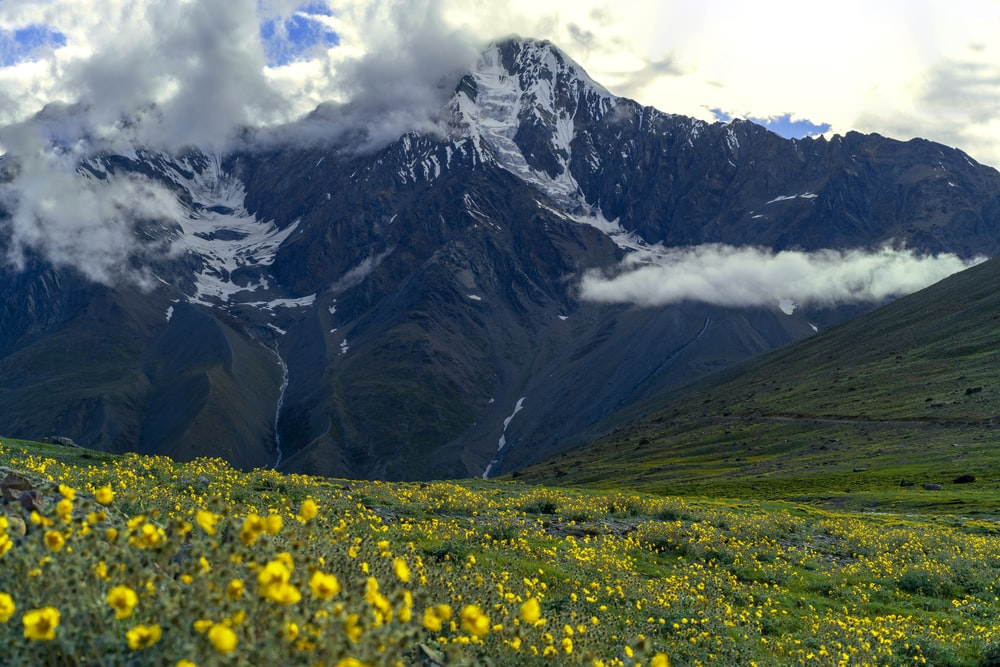yellow flower field near mountain during daytime