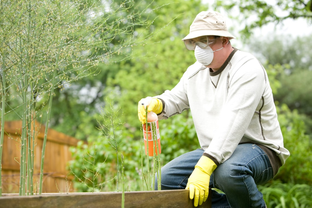 Gardening is a very beneficial activity, not only for the environment, but for those who partake in this exercise. After properly reading the instructions, this man was in the process of applying pesticide spray to his raised-bed home garden.