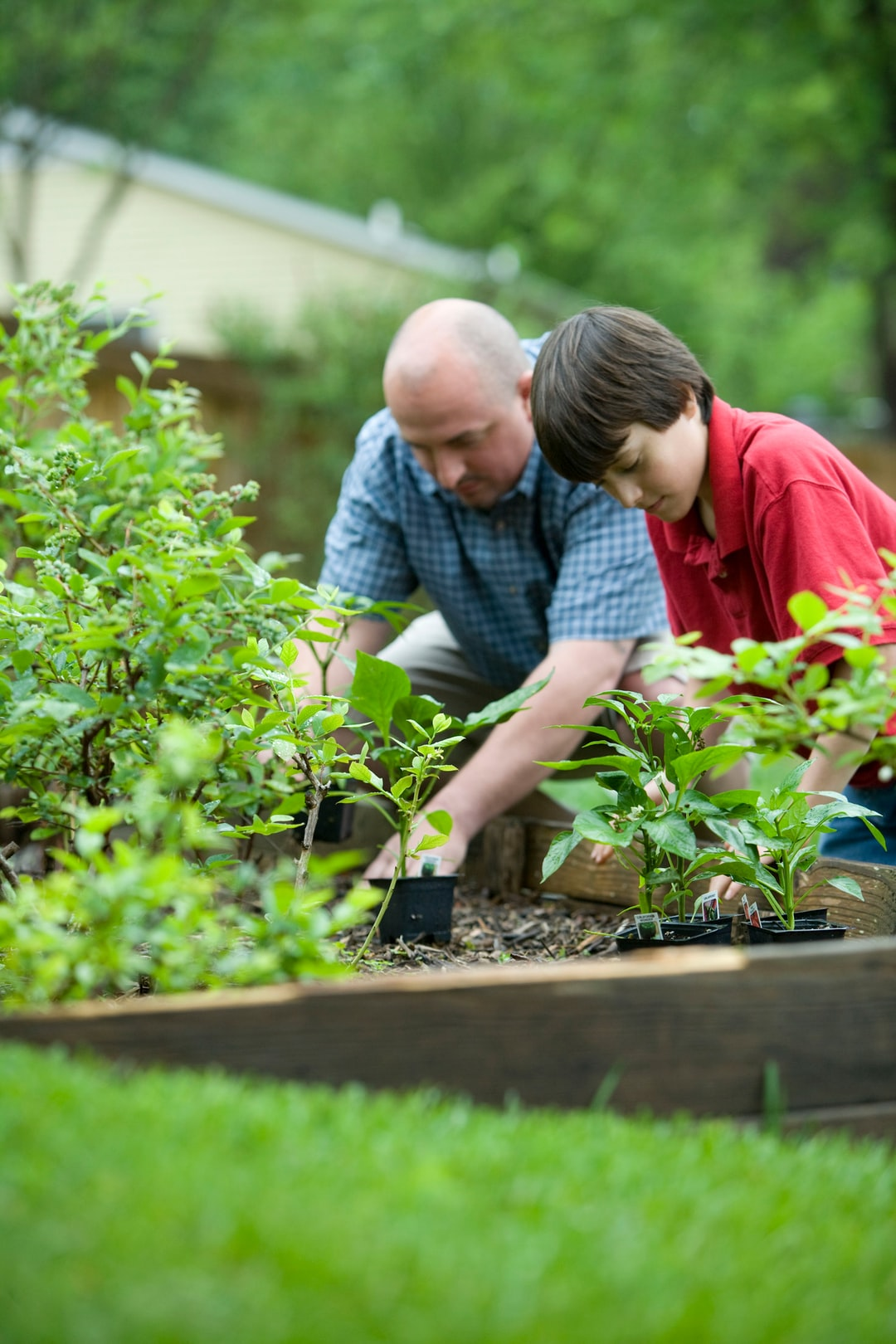 In so many ways, gardening is a very beneficial activity, not only for the environment, but for those who partake in this exercise. This father and son were thoroughly enjoying the fresh outdoor air, as they were planting what appeared to be vegetables in their raised-bed home garden.