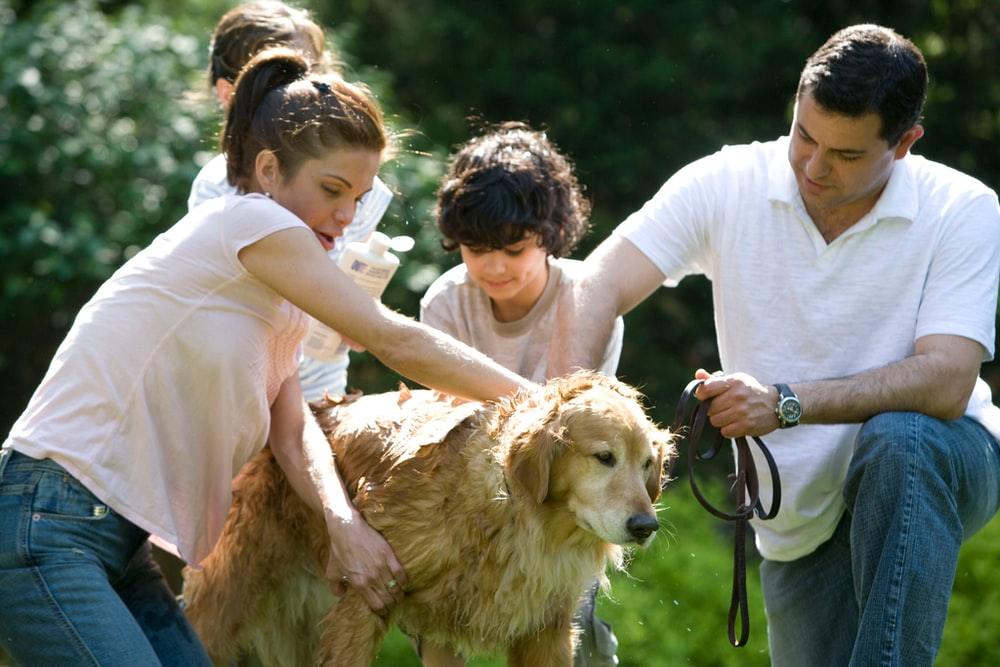 woman in white shirt holding brown short coated dog