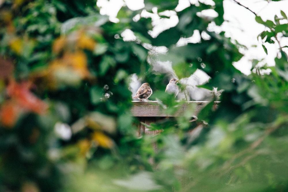 brown bird on brown wooden bird house during daytime