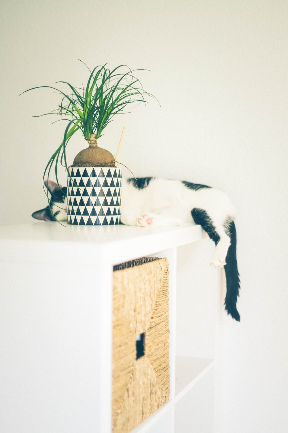 white and black cat on white wooden table
