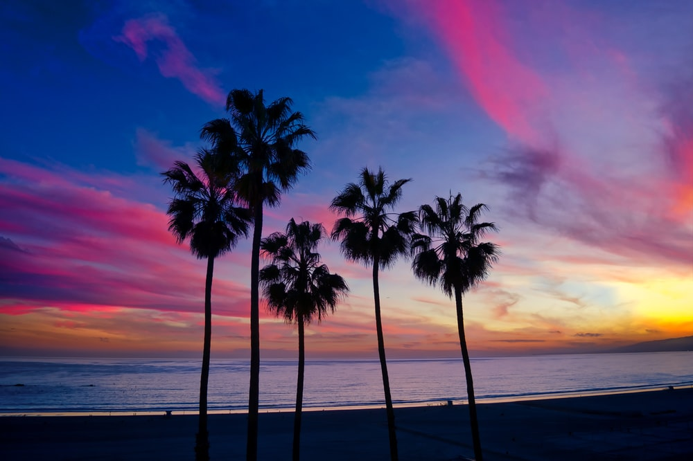 palm tree on beach shore during sunset