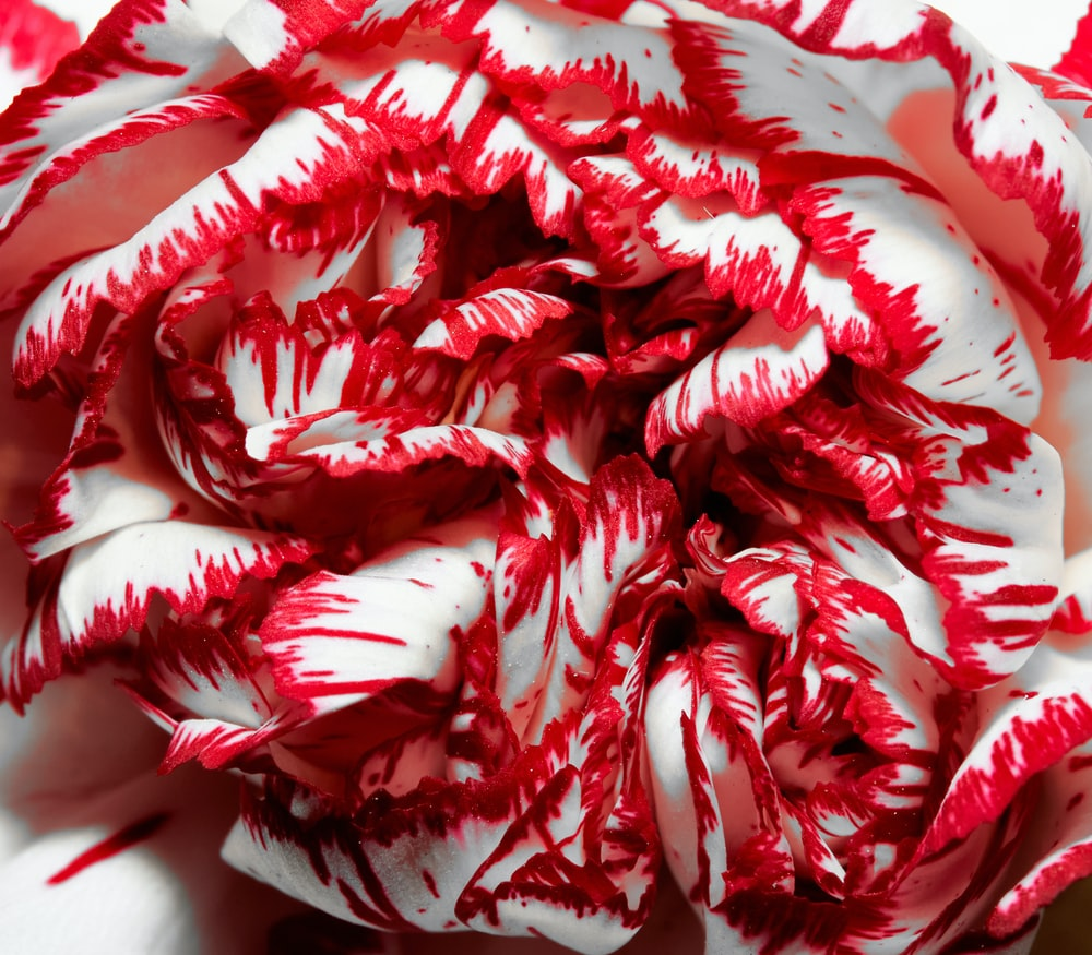 white and red floral textile