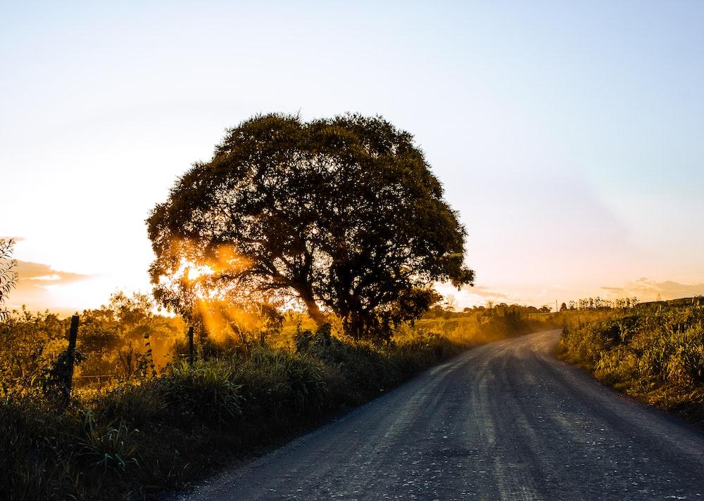 green trees beside gray asphalt road during sunset