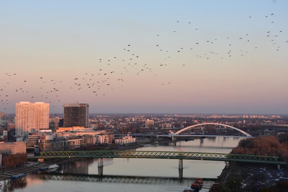birds flying over the bridge during sunset