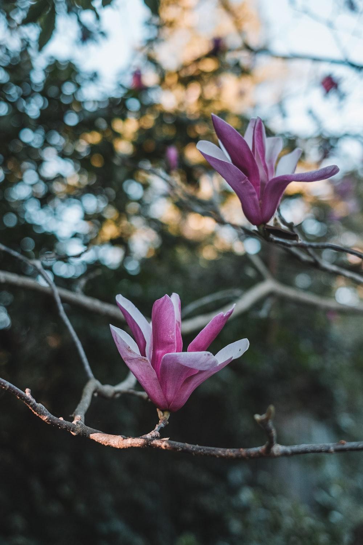 purple flower on brown tree branch during daytime