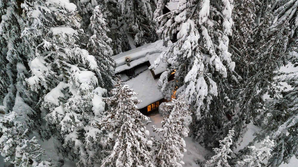 snow covered trees and house during daytime