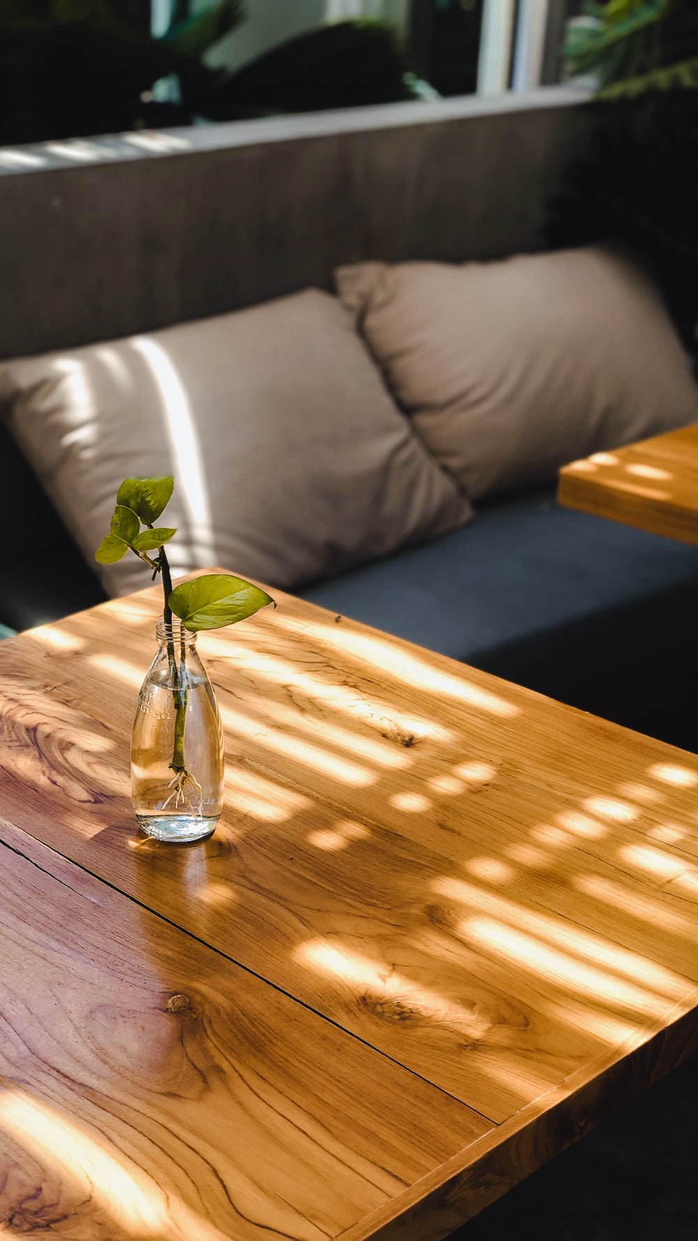 green rose in clear glass vase on brown wooden table