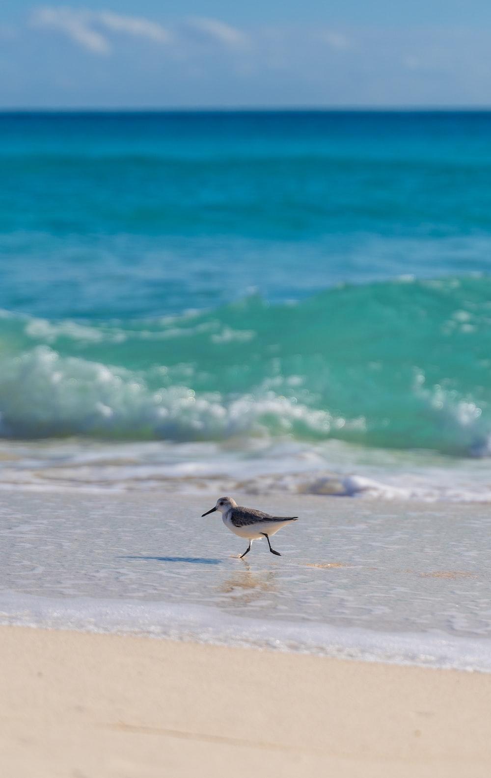 white and black bird on beach during daytime
