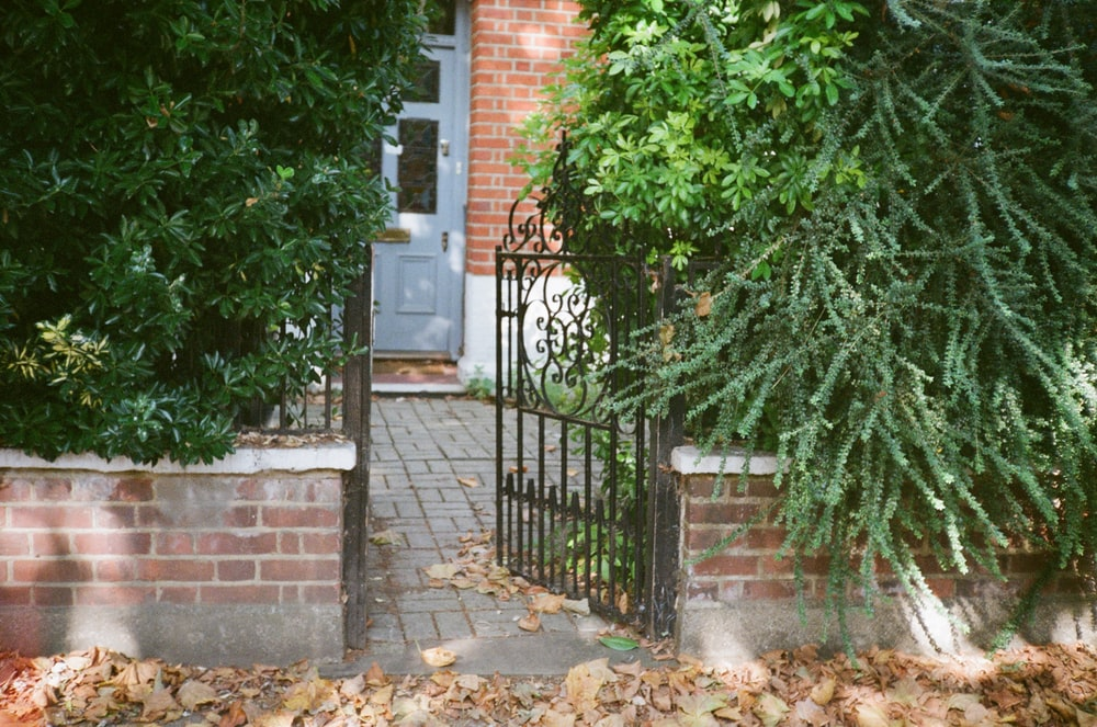green plant beside brown brick wall
