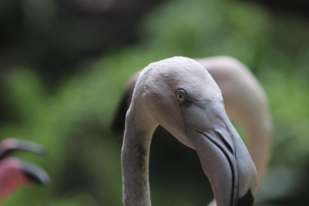 pink flamingo in tilt shift lens