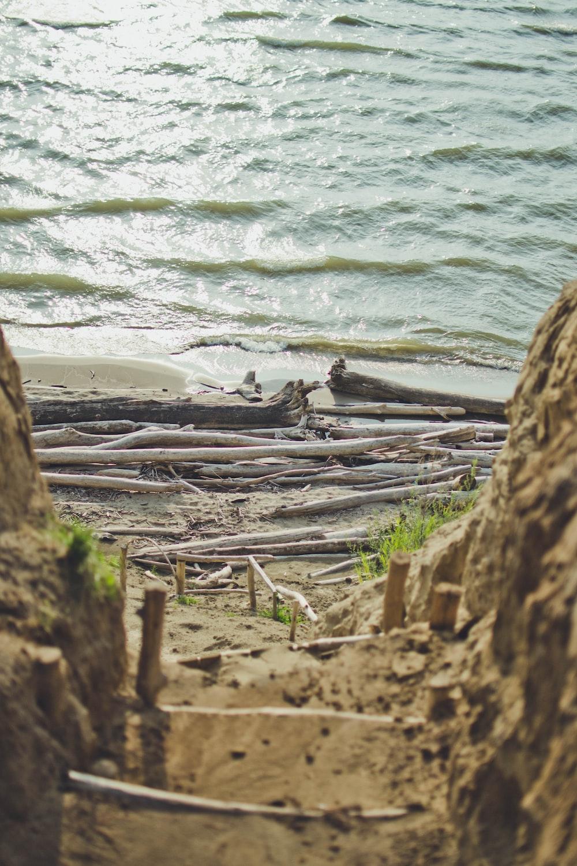 brown wood log on seashore during daytime