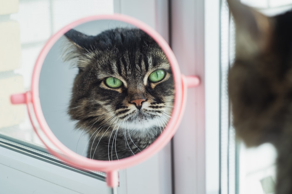 brown tabby cat in pink and white round frame