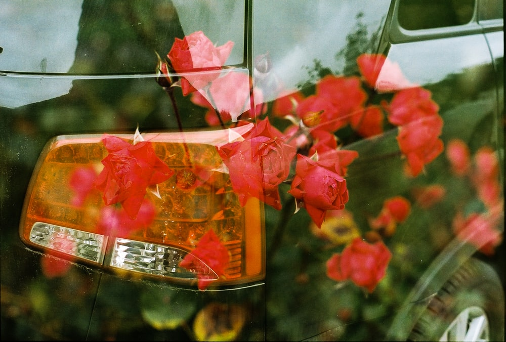 red flowers in clear glass jar