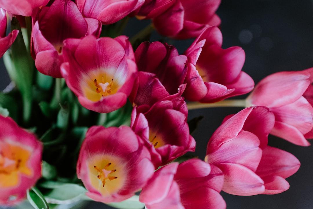 Flowers: Dark pink tulip bouquet