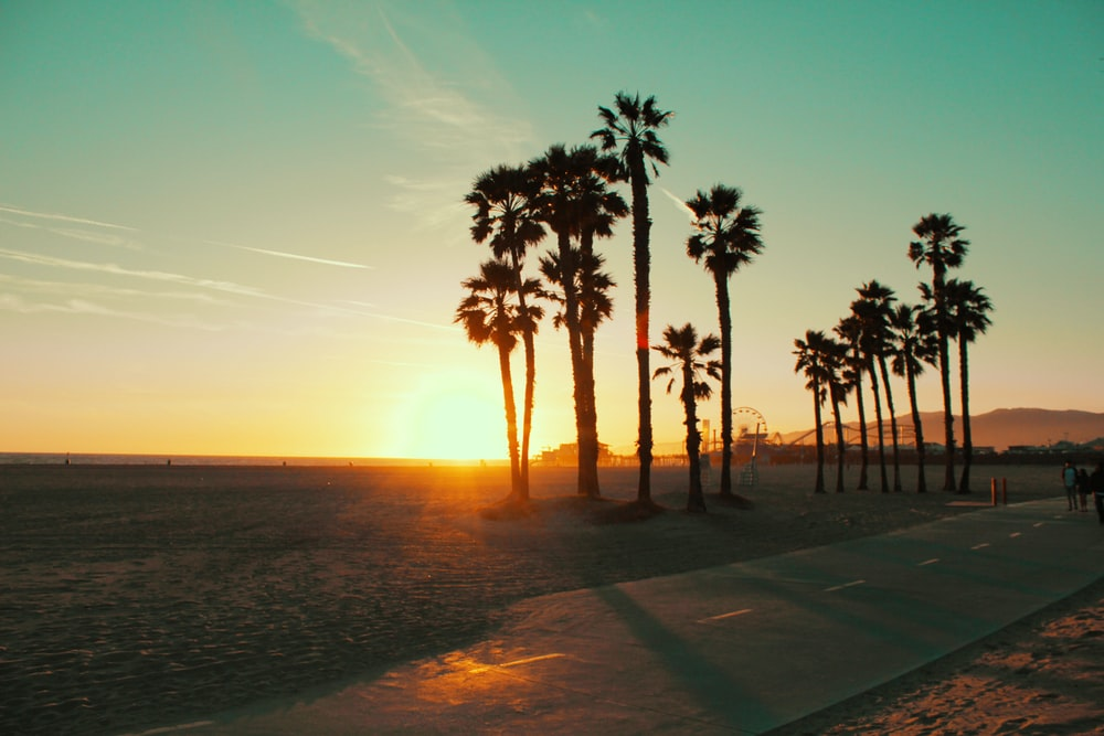 palm trees near sea during sunset