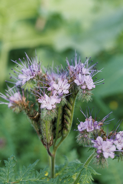 purple flower in macro lens