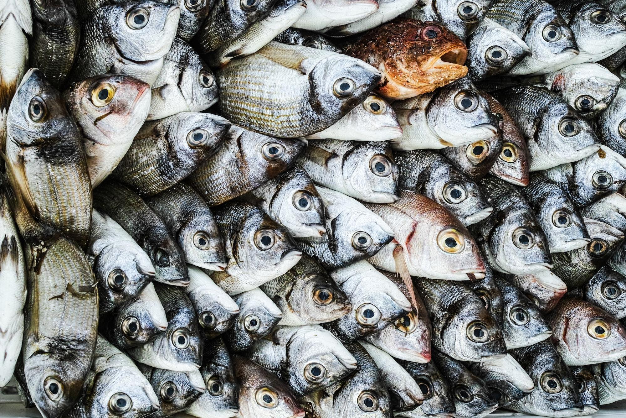 Top Five Fish
