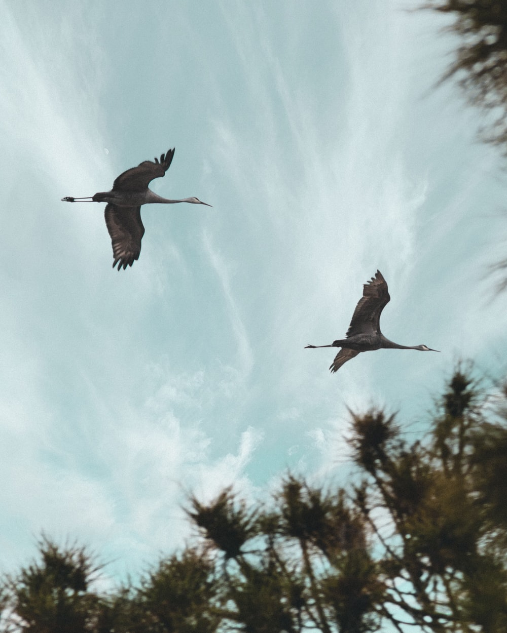 two birds flying under white clouds during daytime