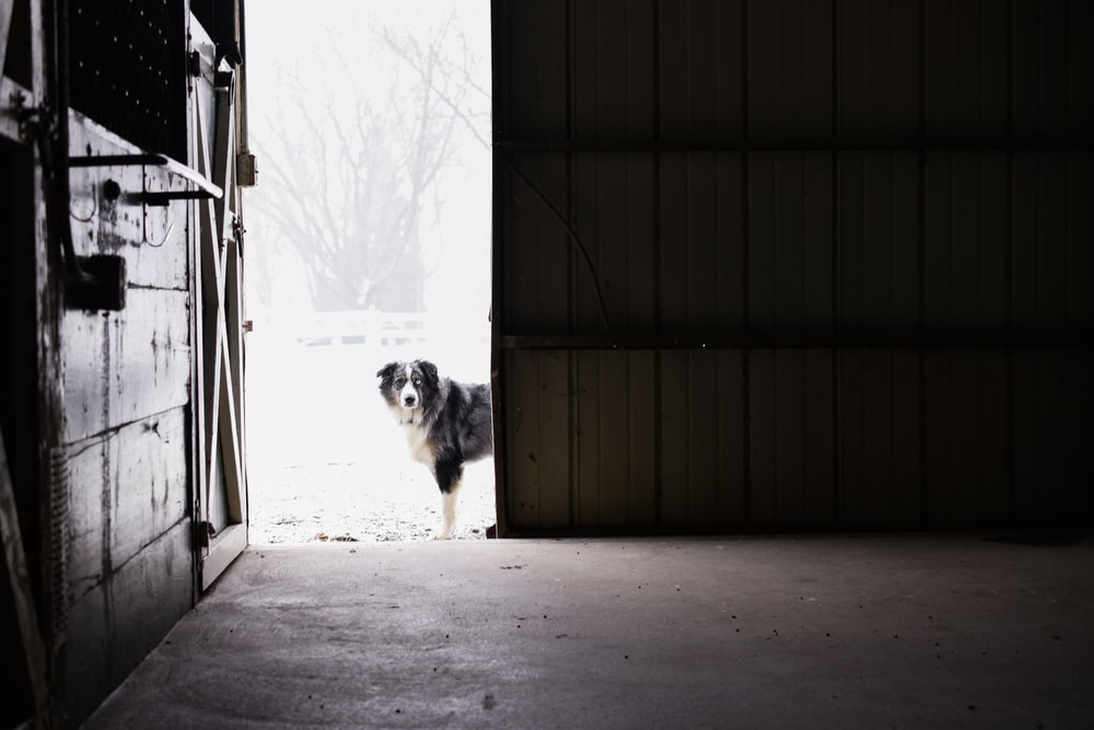 white and black long coated dog standing on gray concrete floor during daytime