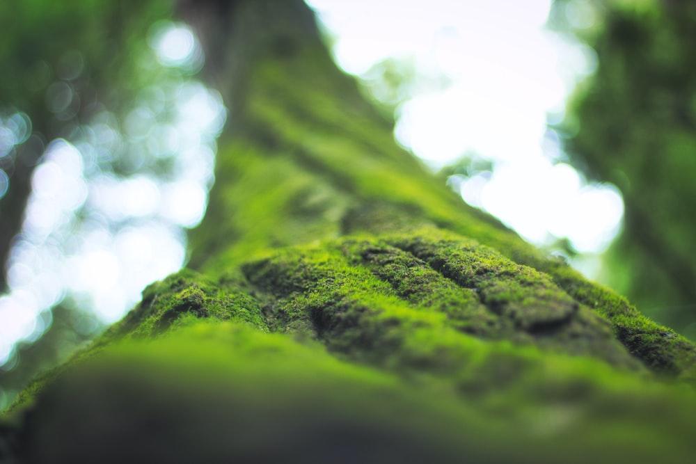 green moss in tilt shift lens