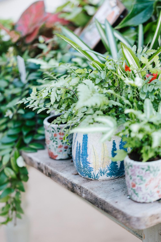 green plant in blue ceramic pot