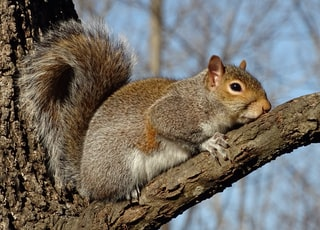 brown squirrel on brown tree branch during daytime