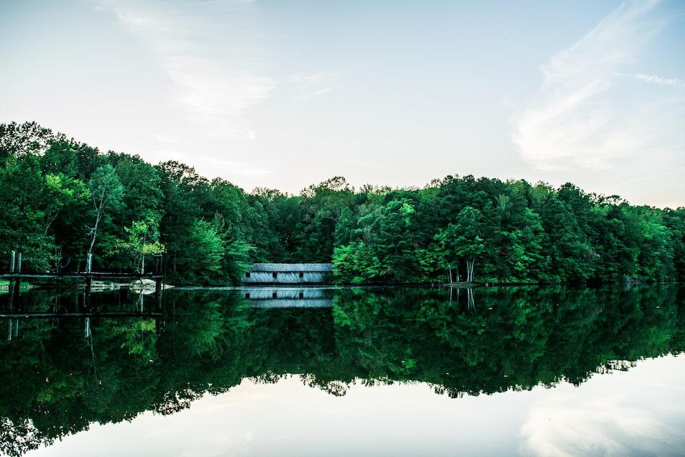 green trees beside lake under white sky during daytime