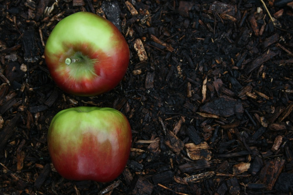red and green apple fruit on brown soil