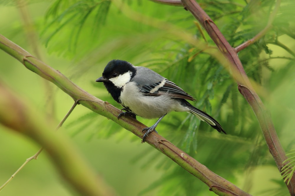 black and white bird on tree branch