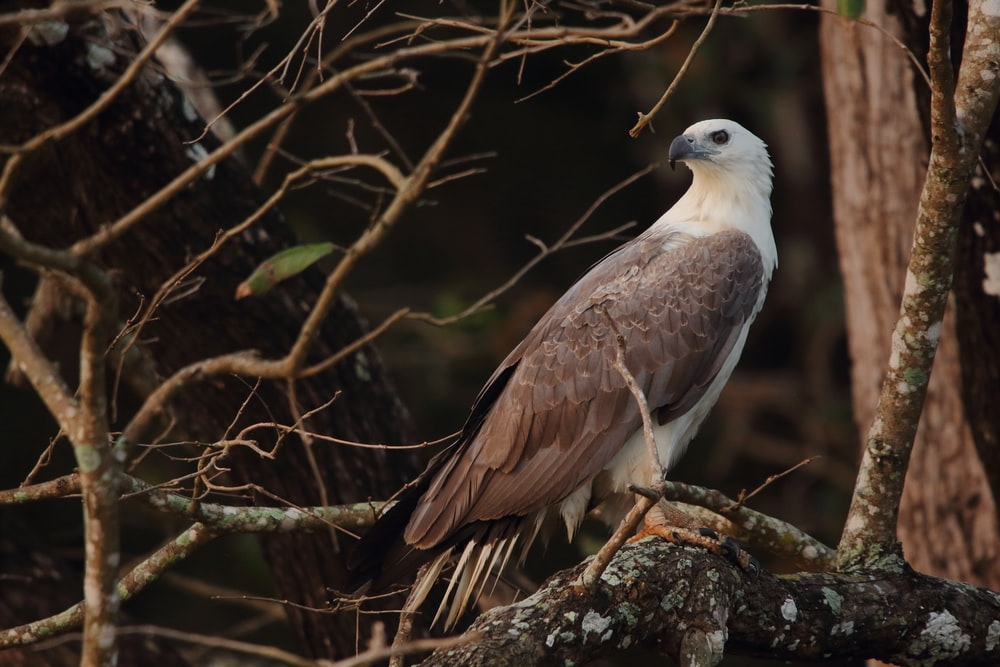 white and brown eagle on brown tree branch