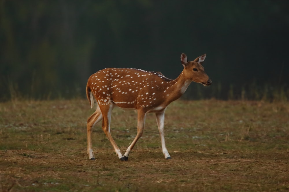 brown and white deer on green grass during daytime