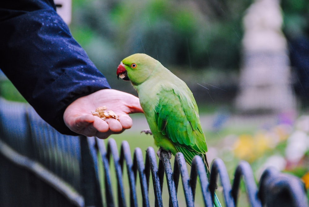 green bird on persons hand