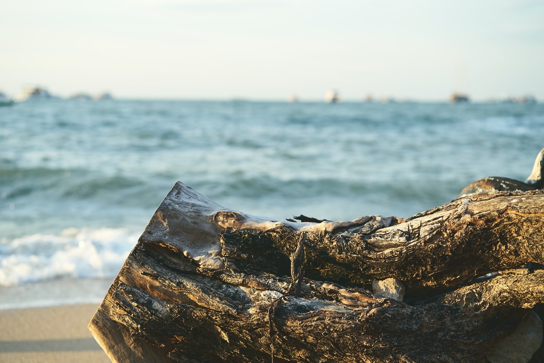 Peaceful Ocean View With Tree Stump In The Sun.