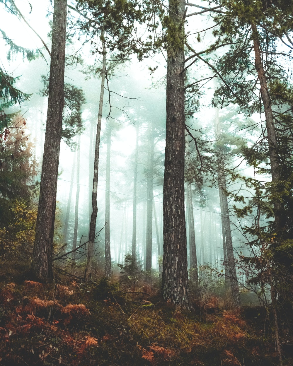 brown trees with fog during daytime