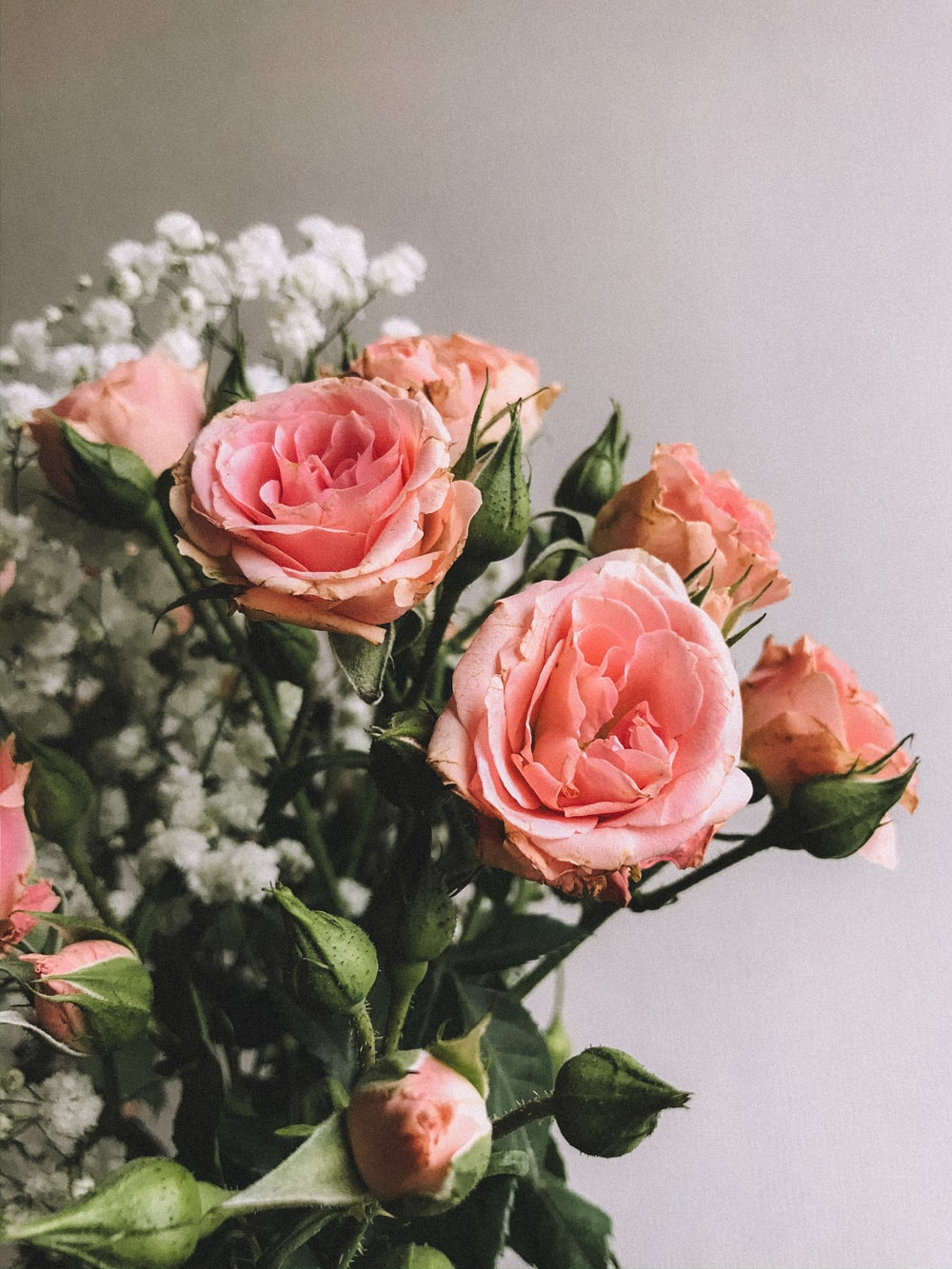 pink roses in white vase
