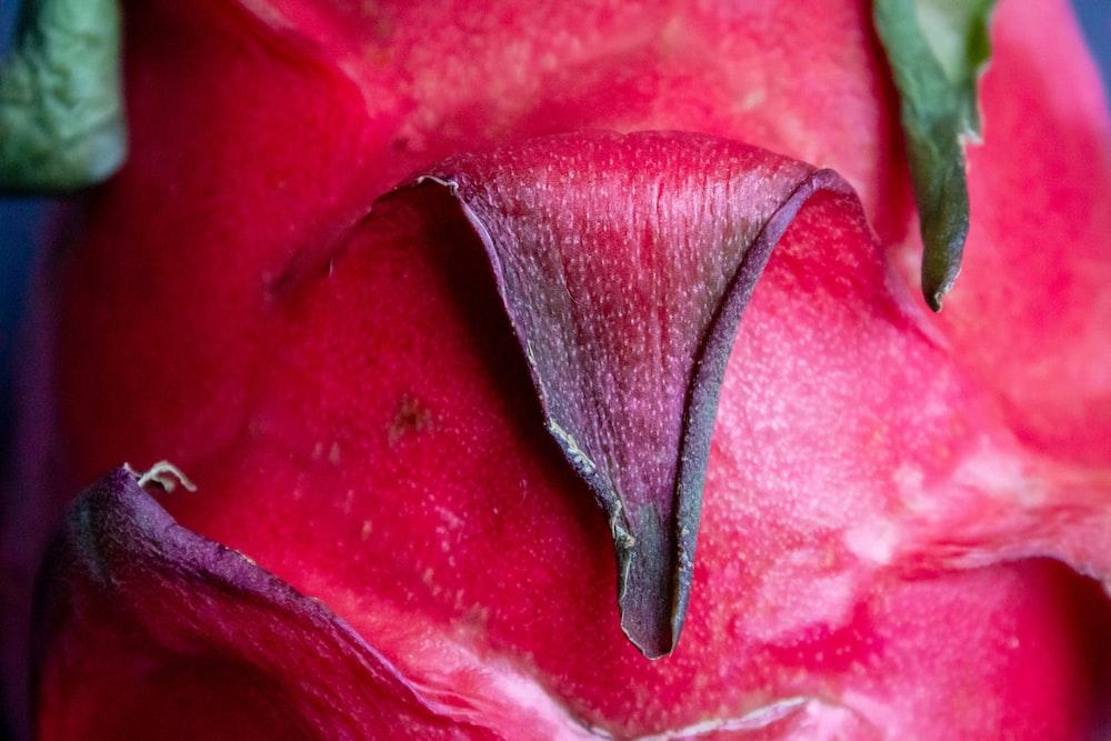 red flower in macro lens