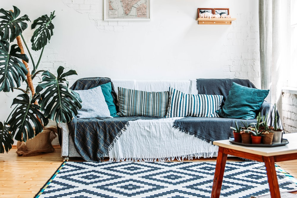 green plant on white and blue sofa