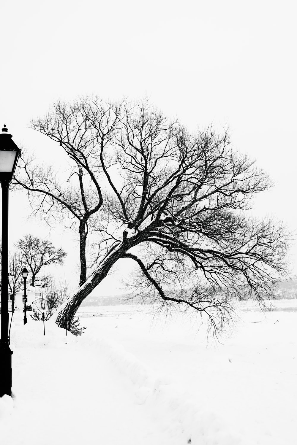 bare tree on snow covered ground