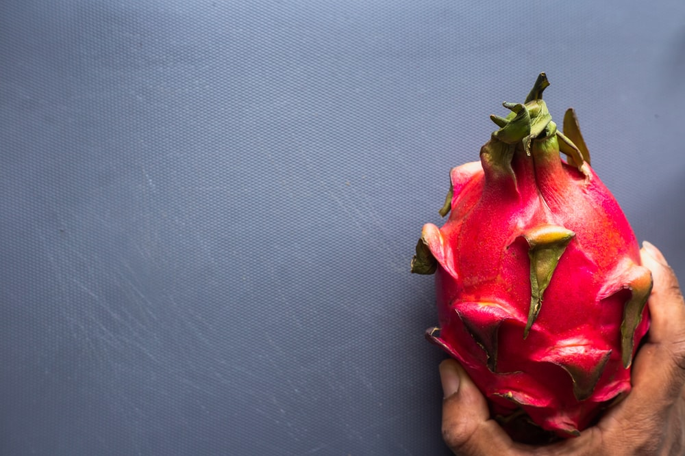 person holding red and green flower