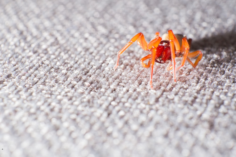 brown and black spider on grey textile