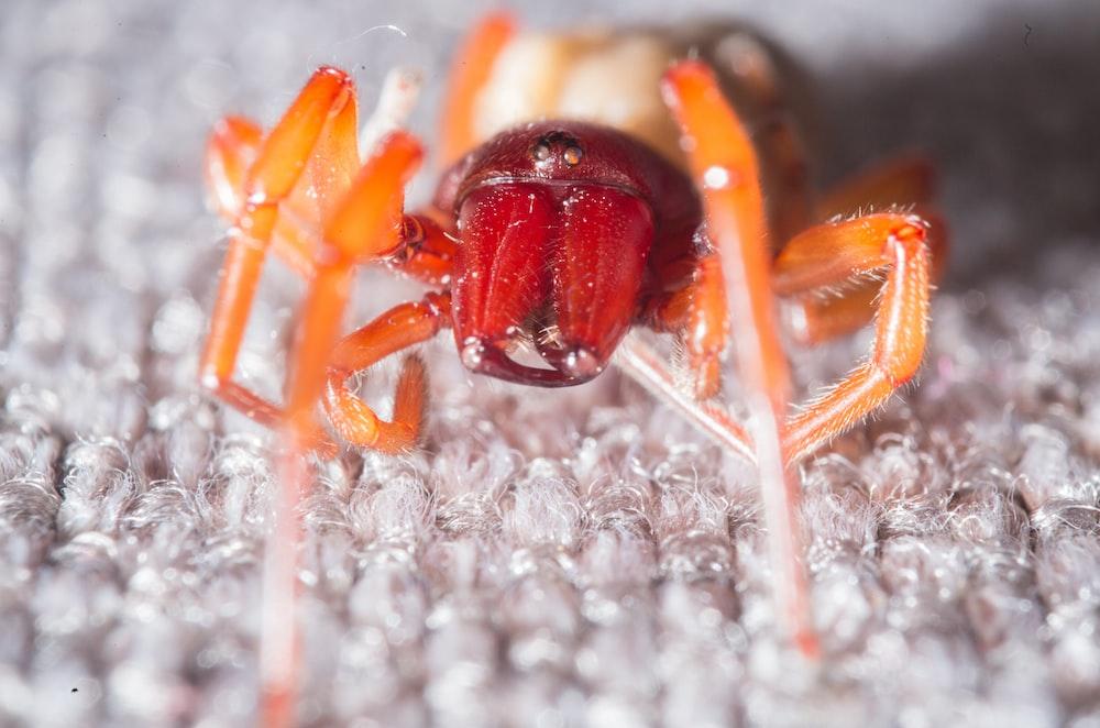 brown ant on white textile