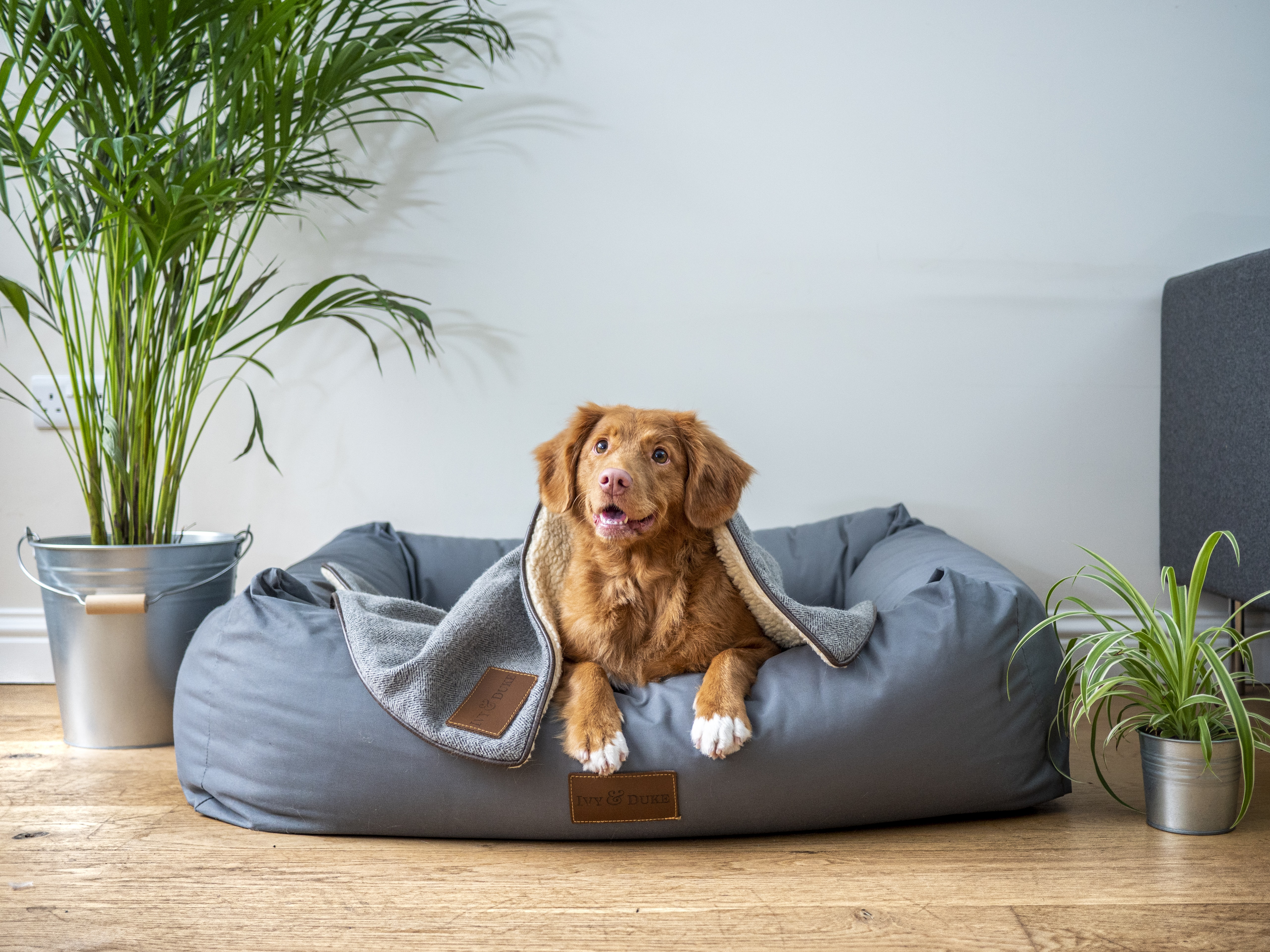 Learn How To Choose The Correct Equipment For Your Dog's Comfort