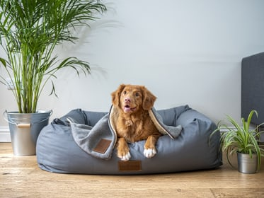Must Have Items For New Dog Owners