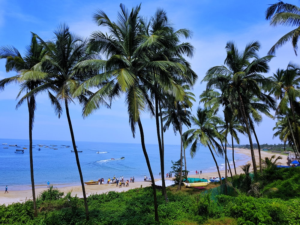 green palm trees on beach during daytime