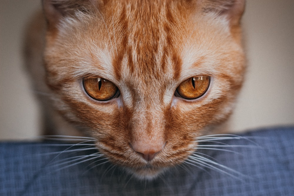 orange tabby cat lying on blue and white plaid textile